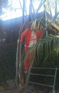My daughter being a kid and climbing a tree in our backyard.