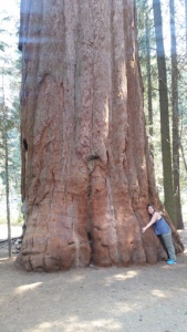 Sequoia forest